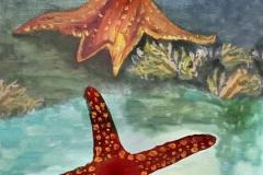 Ollie The Octopus - Illustration 15